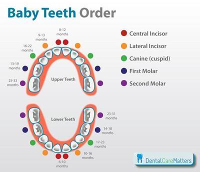 Yuk, Kenali Tahapan Pertumbuhan Gigi Anak Serta Fakta Tentang Proses Pertumbuhannya