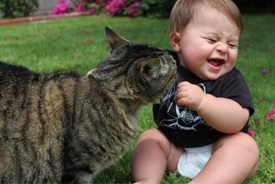 1.Kucing