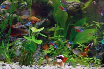 5. Ikan hias