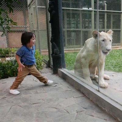 Berkenalan Dengan Hewan
