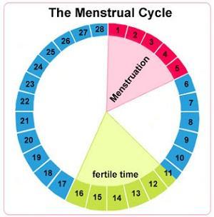 Kenali Siklus Menstruasi Kamu