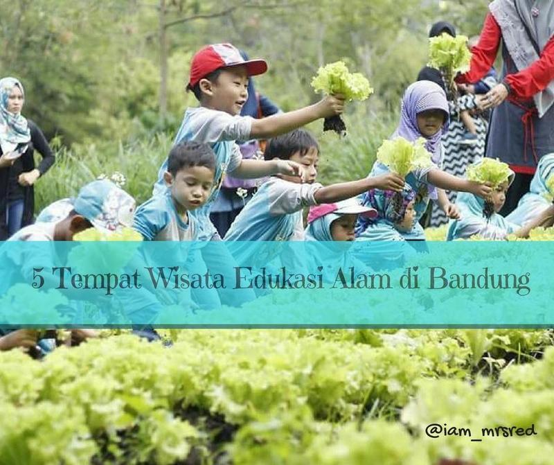 Belajar Berkebun Dan Bertani Untuk Anak Kunjungi 5 Tempat