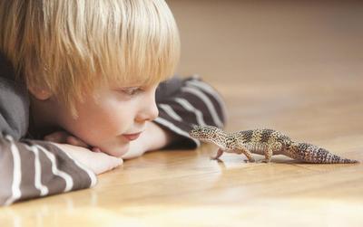 Dari Ikan Hingga Reptil, Mana Hewan Peliharaan yang Terbaik untuk Anak?