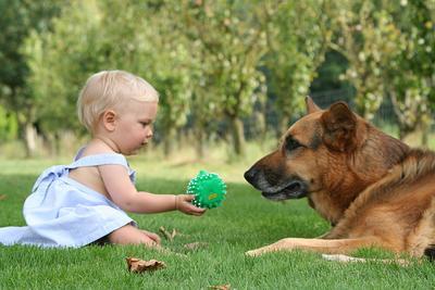 Begini Pertolongan Pertama Anak Digigit Anjing