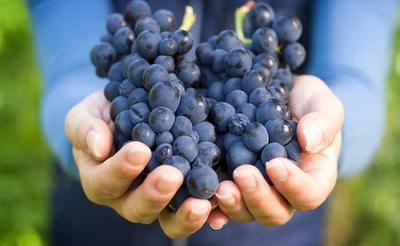 Hamil Anggur, Apa Itu? Kenali Ciri-cirinya dan Cara Penanganannya, Moms