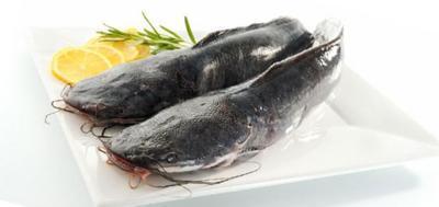 Ikan Lele Mengandung Bakteri jahat