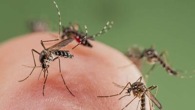 Waspada dengan 5 Jenis Penyakit Mematikan yang Ditularkan oleh Nyamuk Ini, Moms!