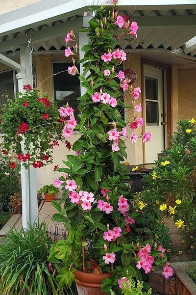 5 Jenis Tanaman Rambat yang Wajib Jadi Pilihan untuk Mempercantik Rumah