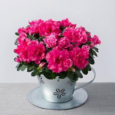 Cantiknya! Ini Rekomendasi Jenis Bunga untuk Hiasan dalam Ruangan