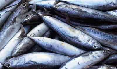 Olahan Ikan Tongkol Rumahan yang Maknyus, Dijamin Bikin Daddy dan Si Kecil Ketagihan!