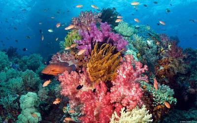 Menikmati Keindahan Laut Saat Liburan, Yuk Ajak Si Kecil ke Taman Nasional Bunaken