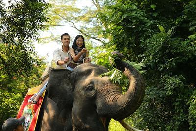 Berburu Tempat Wisata Edukasi Keluarga? Datang ke Taman Safari, Yuk!