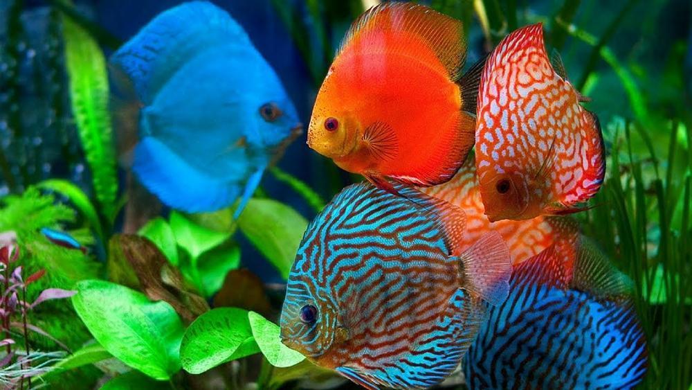 Download 82 Gambar Ikan Hias Yang Mudah Ditiru HD Terbaru