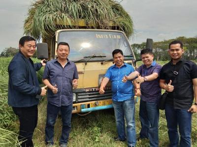 Prospek Serai Wangi di Indonesia