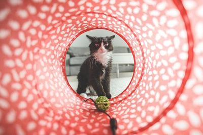 Waspada Kutu Kucing di Hewan Peliharaan Moms, Ini Cara Alami Menghilangkannya
