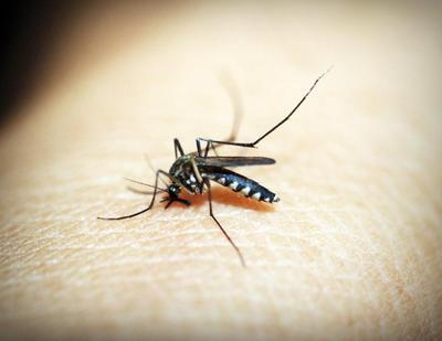 Anti Nyamuk Alami Aman untuk Keluarga, Mommy Harus Tahu!