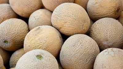 Tips Memilih Buah Melon