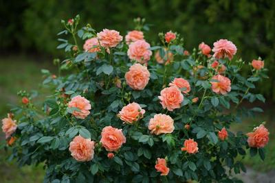 4 Jenis Bunga yang Dipercaya Punya Manfaat Supranatural, Apa Saja?