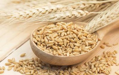 3. Barley
