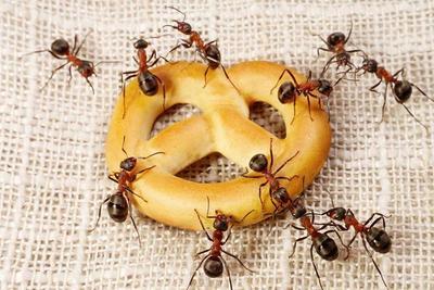 Ampuh dan Efektif! 8 Cara Mengusir Semut dengan Bahan Alami Ini Aman Bagi Si Kecil