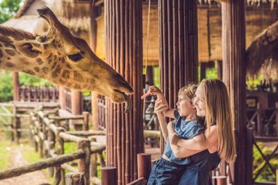 3. Kebun binatang